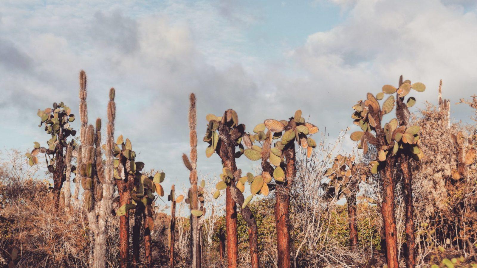 kaktusy Galapagos