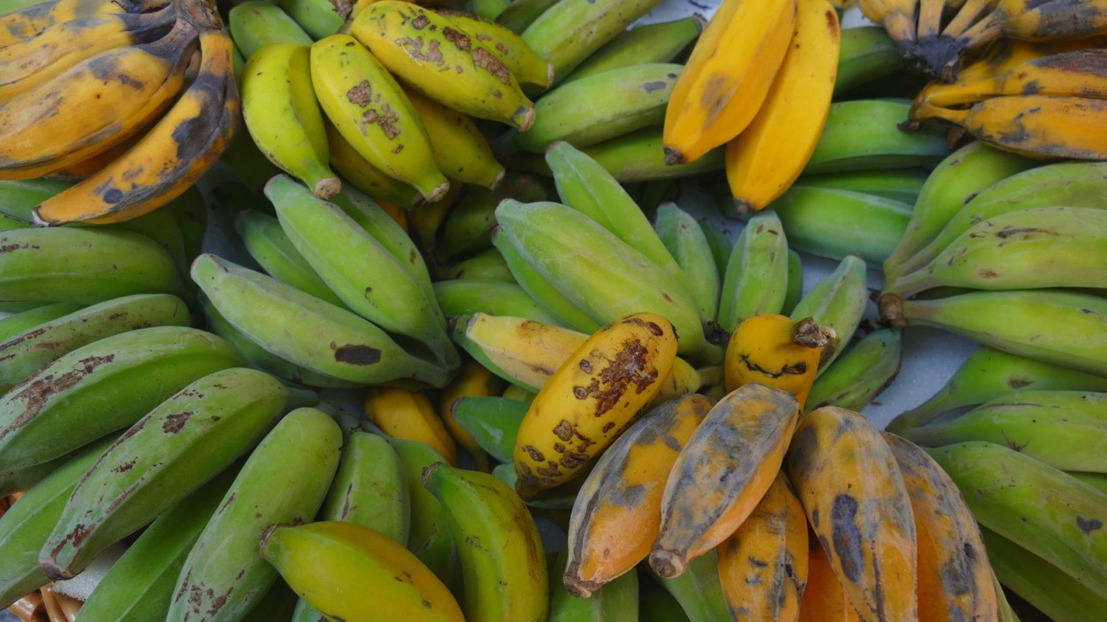 owoce na Maderze